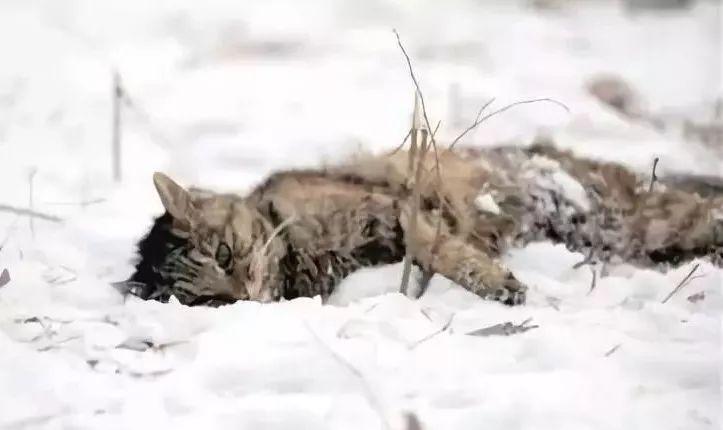 这个冬末春初的时节,它们真的很冷
